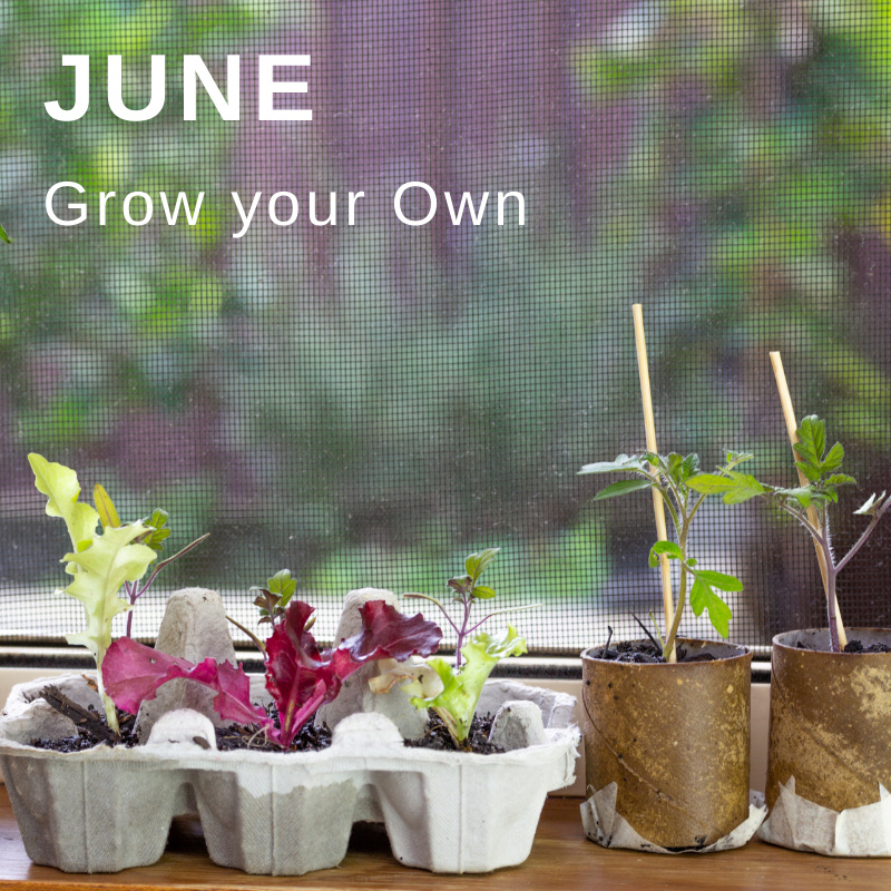 Wellbeing campaign June - grow your own